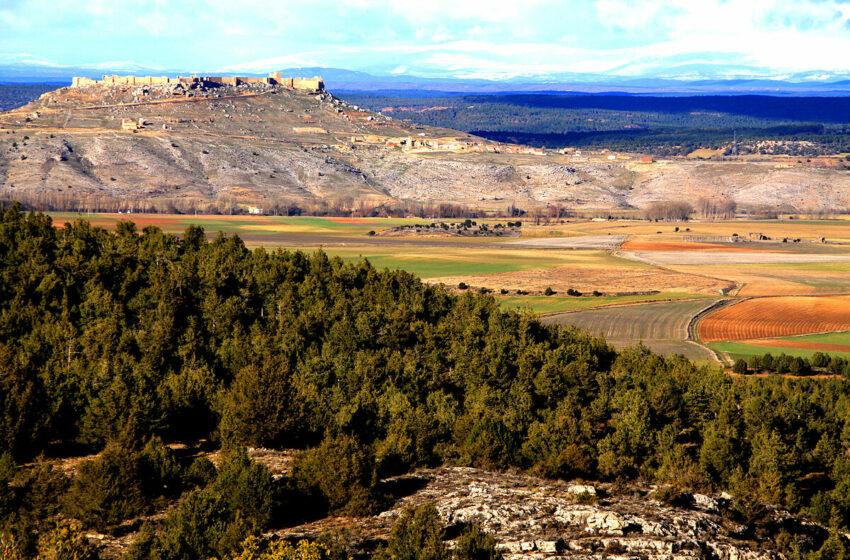 La contienda 'verde' de Gormaz: una granja porcina a los pies de la fortaleza medieval … – El Mundo