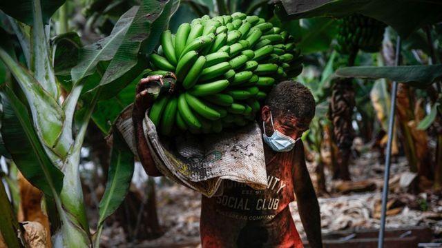 Agricultor en Las Palmas