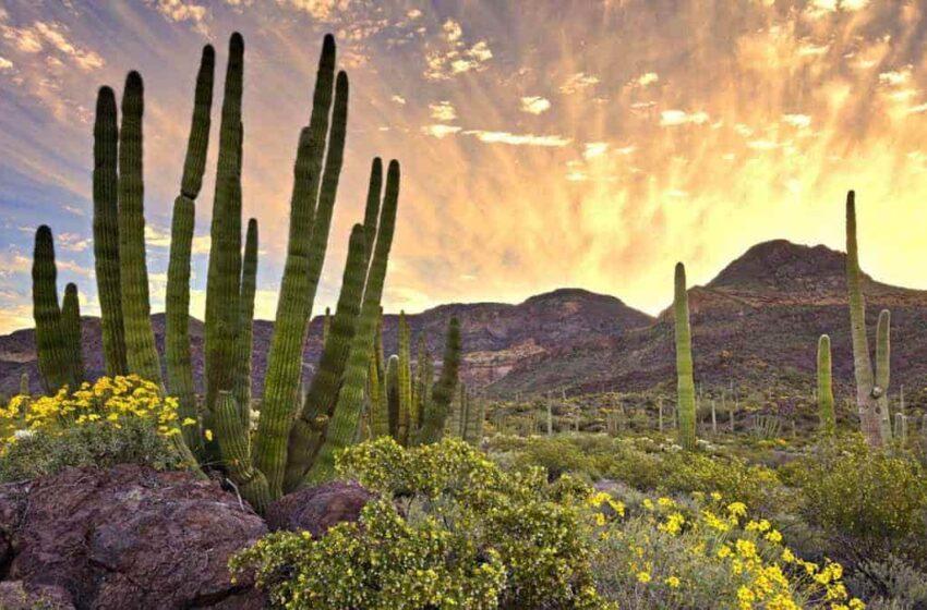 Flora y fauna, en peligro – Diario del Yaqui