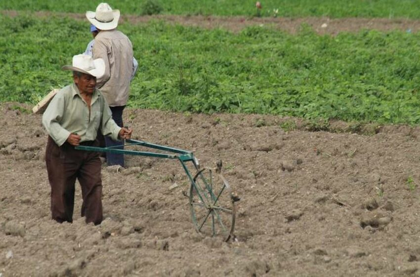 Lluvias dejan buenos resultados para agricultores y ganaderos de Durango – El Sol de …