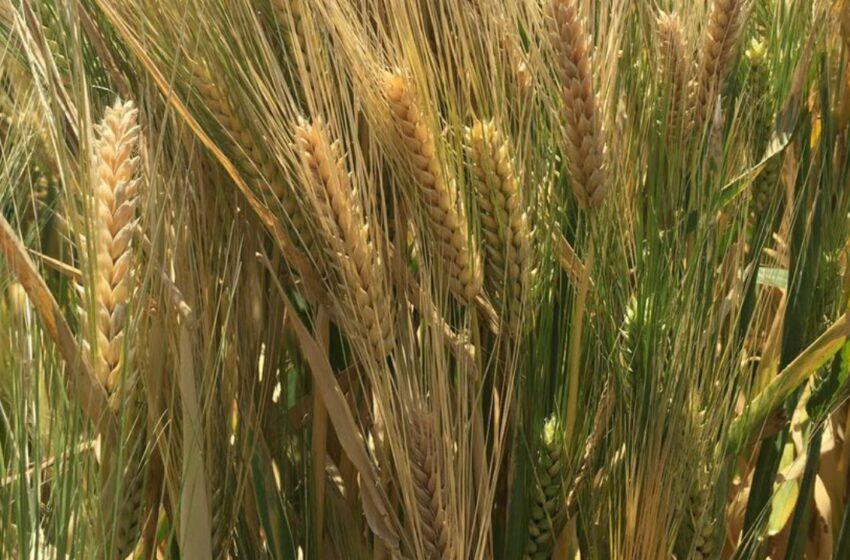 Agricultura sostenible: el compromiso de la agroindustria cervecera mexicana • Red Forbes …