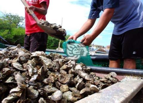 Continúa saqueo clandestino de especies en laguna de Mandinga – Imagen de Veracruz