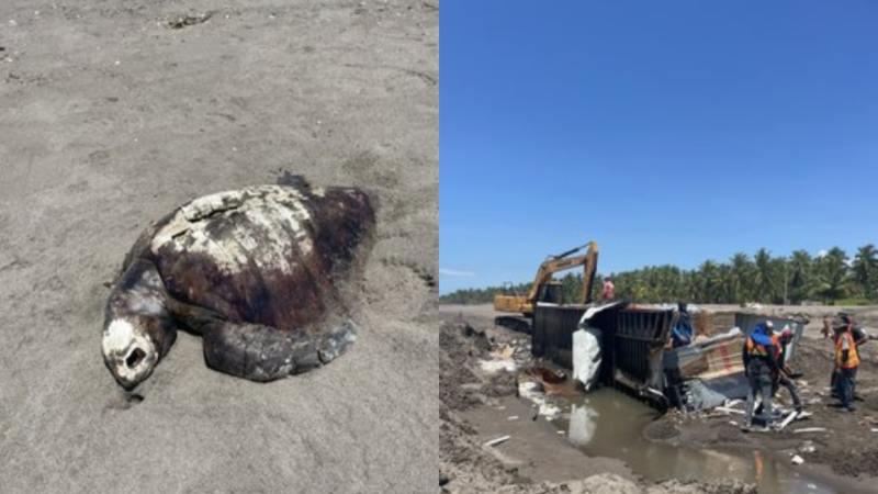 Contenedores que cayeron en altamar hace unos días causan daño ambiental en playa …