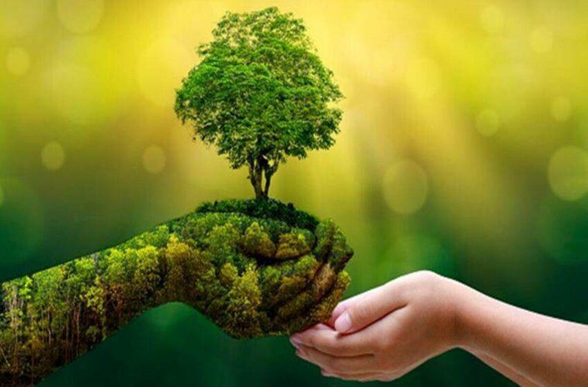 El 22% de los compradores está muy preocupado por el medio ambiente: estudio de Kantar …