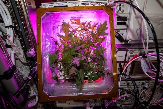 Jardinería espacial: la solución que encontró la NASA para combatir la soledad de los astronautas