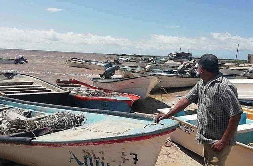 Pésima zafra camaronera en el sur de Sonora – Diario del Yaqui