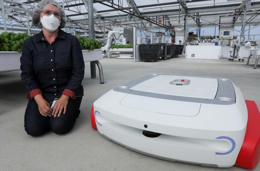 Startup de Silicon Valley enfocada en robots agrícolas recauda 50 mdd – Business Insider México
