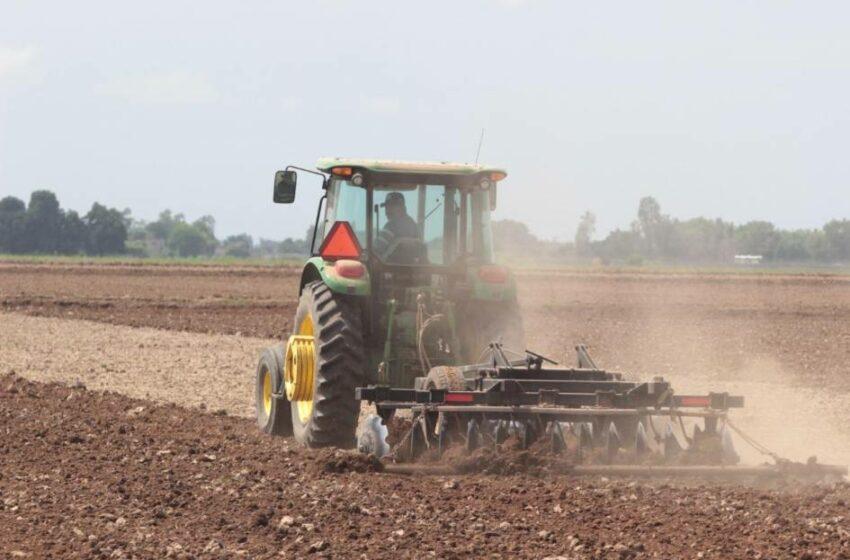 Prevén sembrar 711 mil hectáreas en Sinaloa, 59% de maíz blanco – Periódico Noroeste