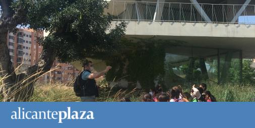 Alicante activa el programa escolar de educación ambiental con actividades para 60 centros