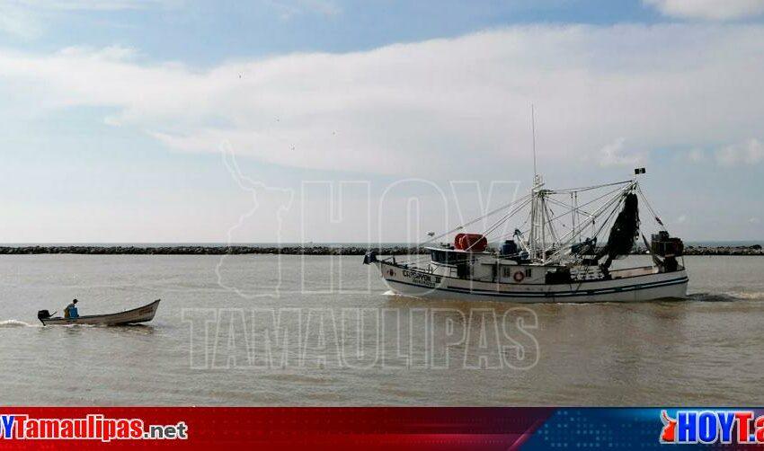 Mala calificación de EU impide a Tamaulipas exportar miles de toneladas de camarón