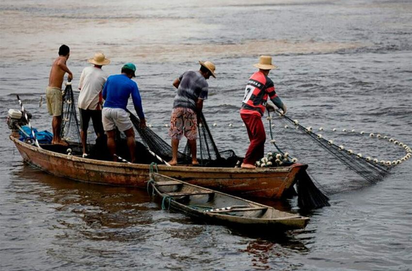Pescadores veracruzanos se encuentran preocupados tras la disminución de las especies …