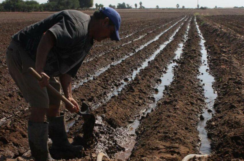 Agricultores privados de Guasave, en contra de Régimen de Confianza – Periódico Noroeste