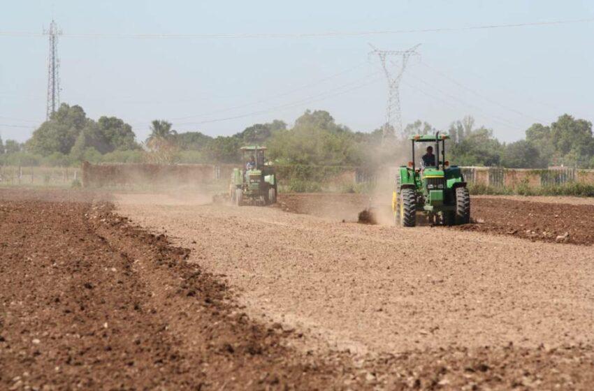 En el Distrito 063 de Guasave prevén sembrar 92 mil hectáreas en este ciclo agrícola