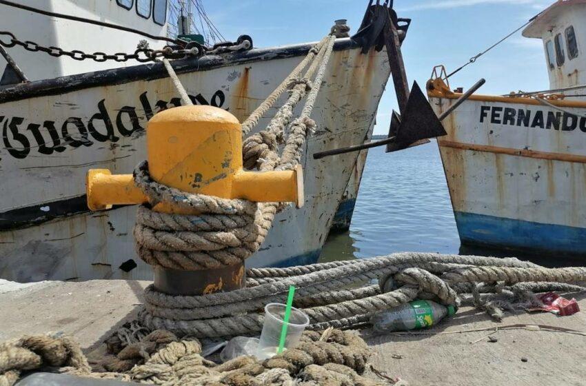 En riesgo, el segundo viaje de capturas de camarón – El Sol de Mazatlán
