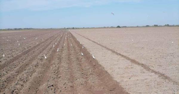 Preparan tierras agrícolas