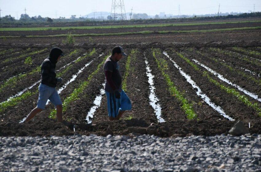 En riesgo cultivos por malas decisiones de Conagua: AARFS – Debate