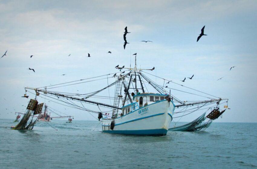 Tomarán el timón del sector pesquero – Punto MX