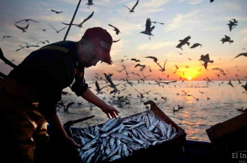 Se han otorgado más de mil 700 seguros de vida a pescadores de Baja California Sur – El …