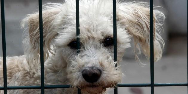 """Denuncian muerte de """"Boby"""", el perro arrastrado desde una camioneta"""