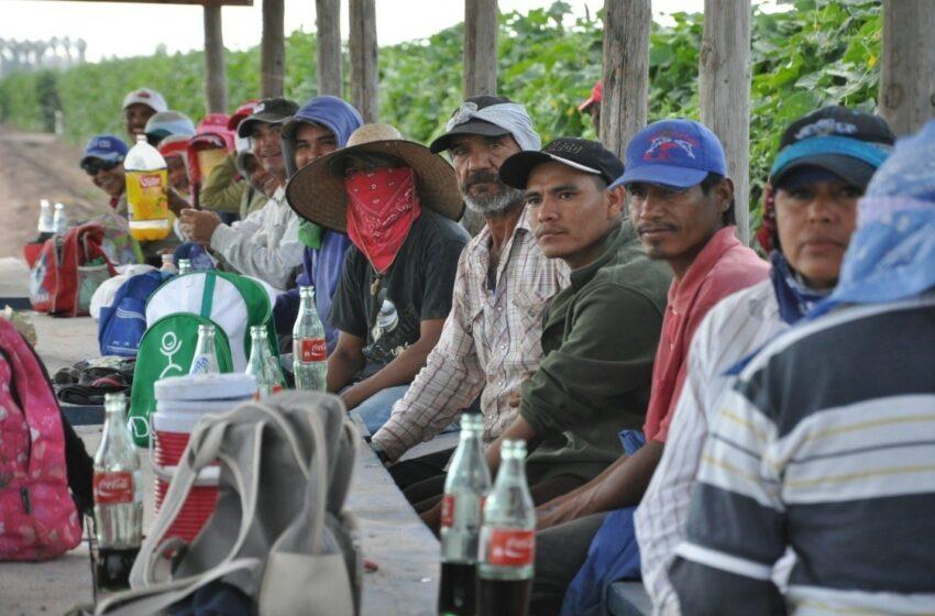 Solicita SNE contratar a sinaloenses en los campos agrícolas – Debate
